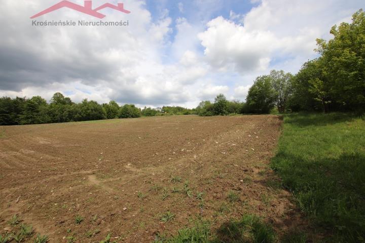 Działka rolna na sprzedaż Korczyna  3000m2 Foto 3