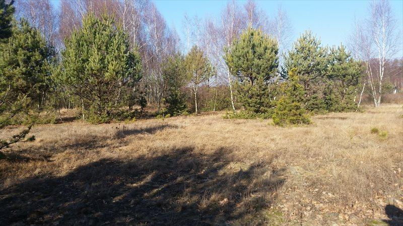 Działka rolna na sprzedaż Mariew  1500m2 Foto 7