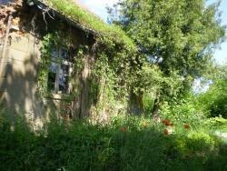 Działka siedliskowa na sprzedaż Plewki  11800m2 Foto 3