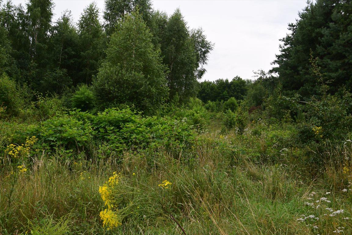 Działka siedliskowa na sprzedaż Tomaszew, okolice Żyrardowa, okolice Żyrardowa  16200m2 Foto 7