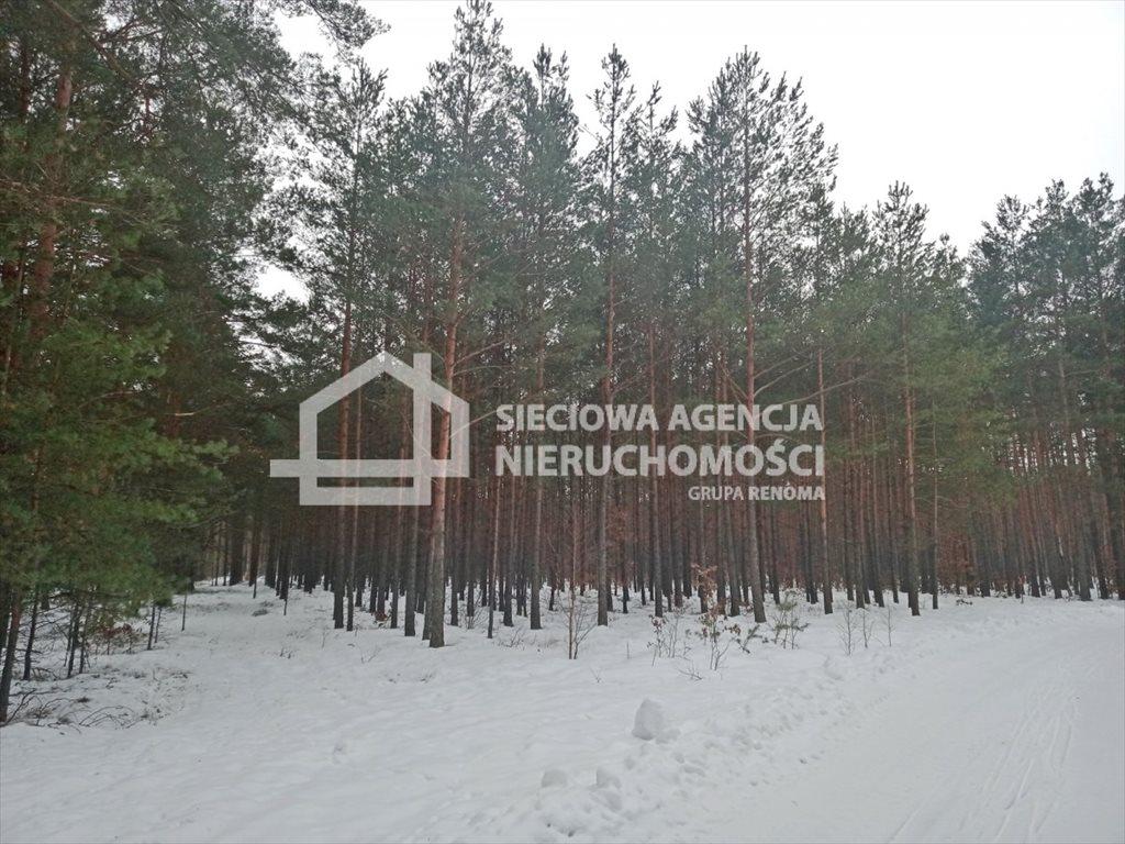 Działka leśna na sprzedaż Zawada  3110m2 Foto 3