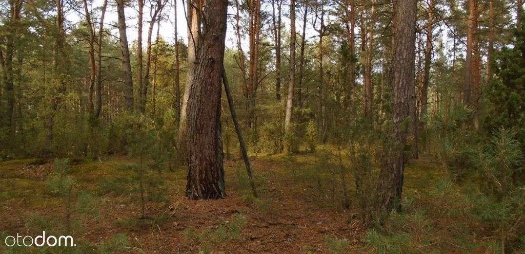 Działka leśna na sprzedaż Grudunki  140100m2 Foto 2