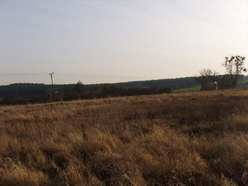Działka budowlana na sprzedaż Rurka  3000m2 Foto 3