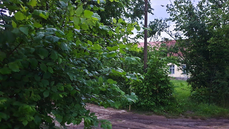 Działka siedliskowa na sprzedaż Grzegorze  14000m2 Foto 11