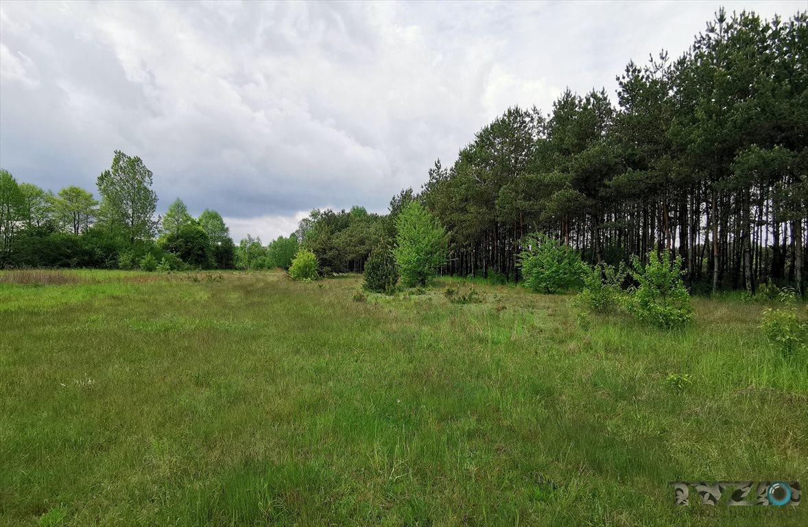 Działka rolna na sprzedaż Warszówka  12200m2 Foto 5
