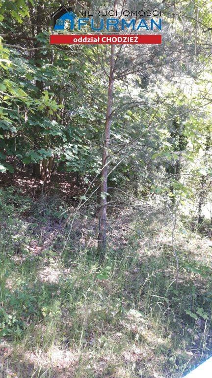 Działka leśna na sprzedaż Kaczory  2645m2 Foto 2