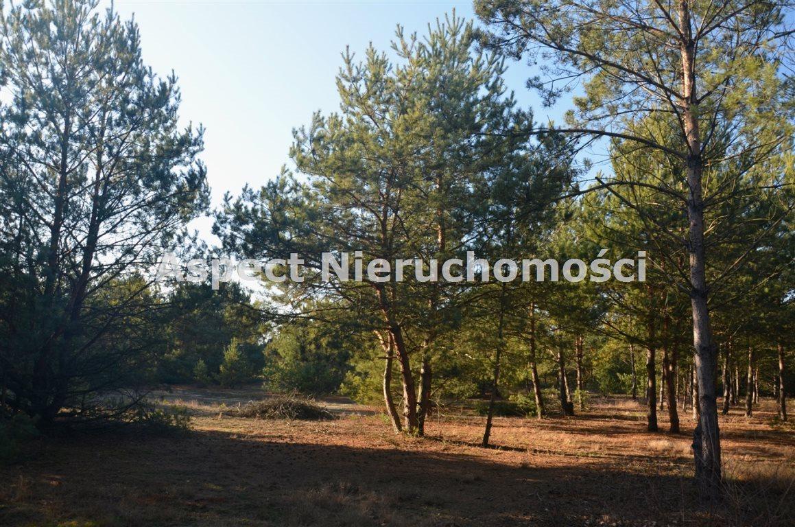 Działka leśna na sprzedaż Suchcice  12200m2 Foto 1