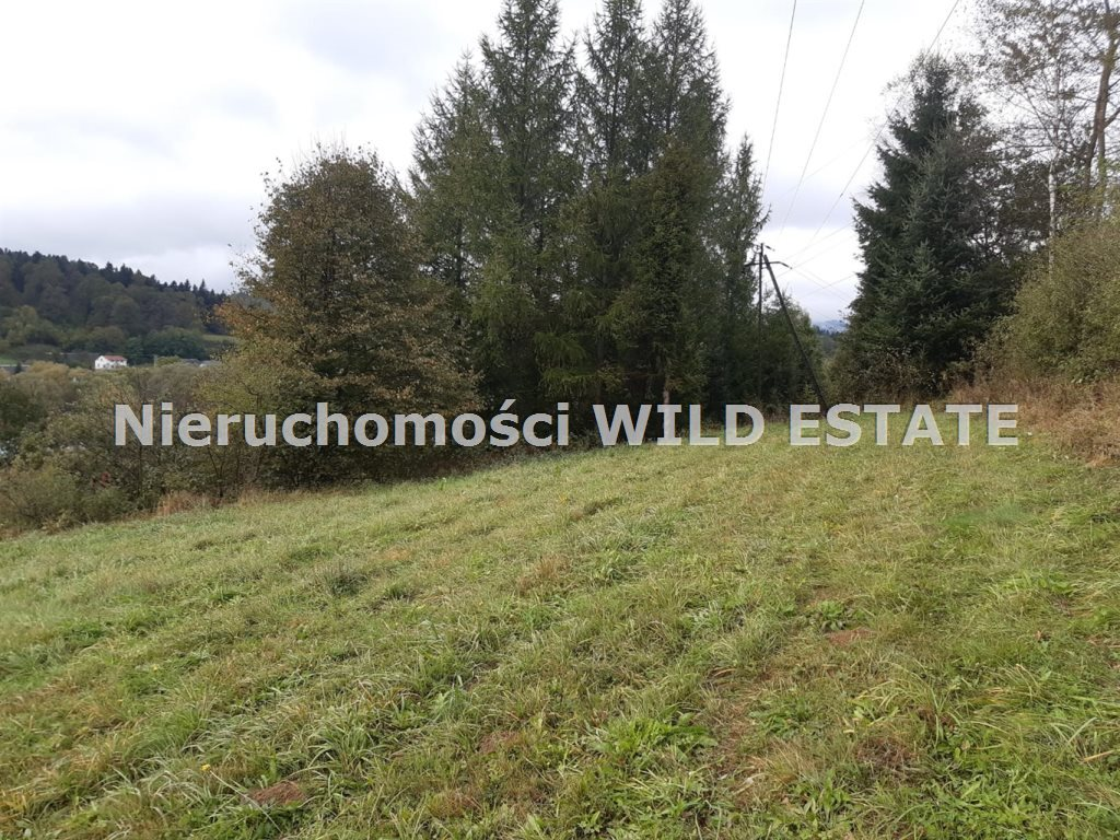 Działka rolna na sprzedaż Olszanica, Olszanica  4017m2 Foto 4