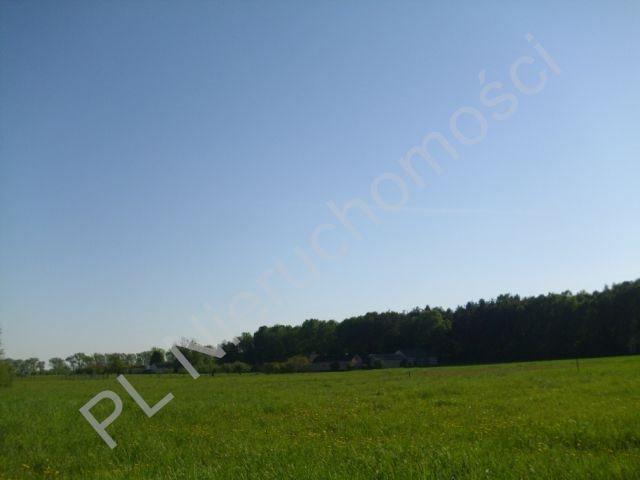 Działka budowlana na sprzedaż Szamoty  1648m2 Foto 1