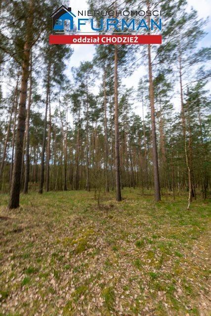 Działka leśna na sprzedaż Tarnowo  19800m2 Foto 2