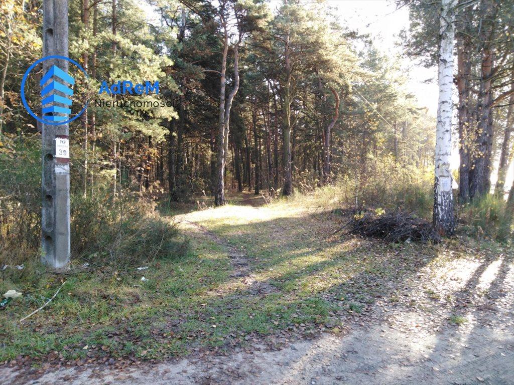 Działka leśna na sprzedaż Jeziórko, Świerkowa  1000m2 Foto 6