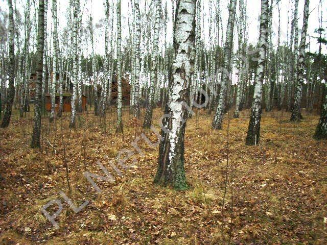 Działka leśna na sprzedaż Lesznowola  1918m2 Foto 6