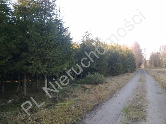 Działka rolna na sprzedaż Grzegorzewice  8000m2 Foto 2
