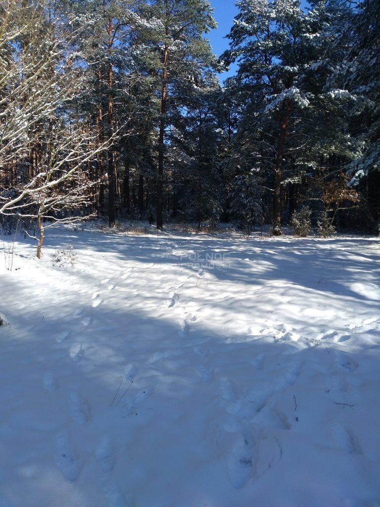 Działka leśna na sprzedaż Kuźnica  6100m2 Foto 13