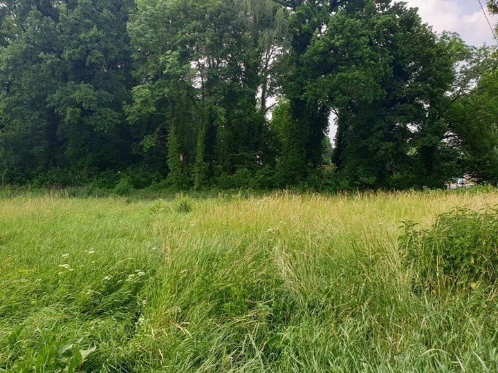 Działka rolna pod dzierżawę Chojna  2013m2 Foto 1