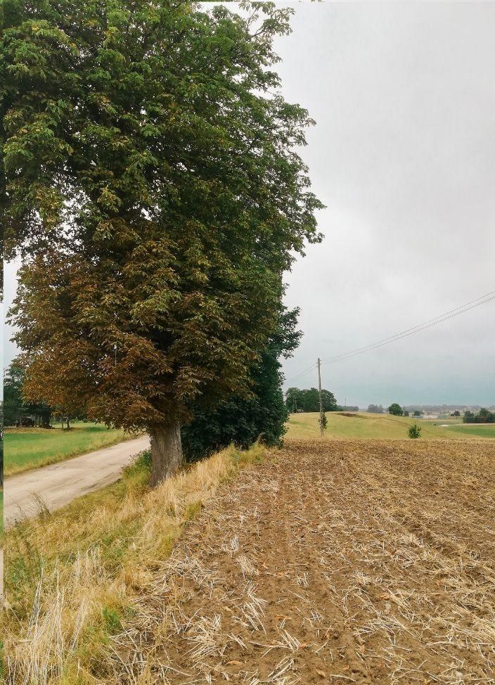 Działka rolna na sprzedaż Jeleń  5141m2 Foto 4