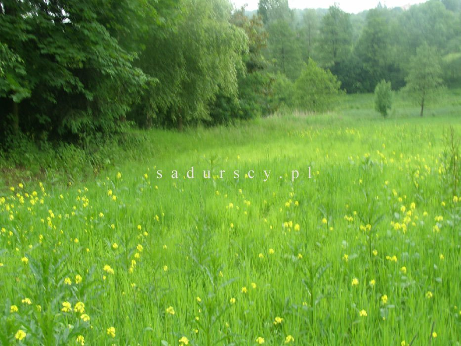 Działka rolna na sprzedaż Kraków, Podgórze, Romana Żelazowskiego  2410m2 Foto 3