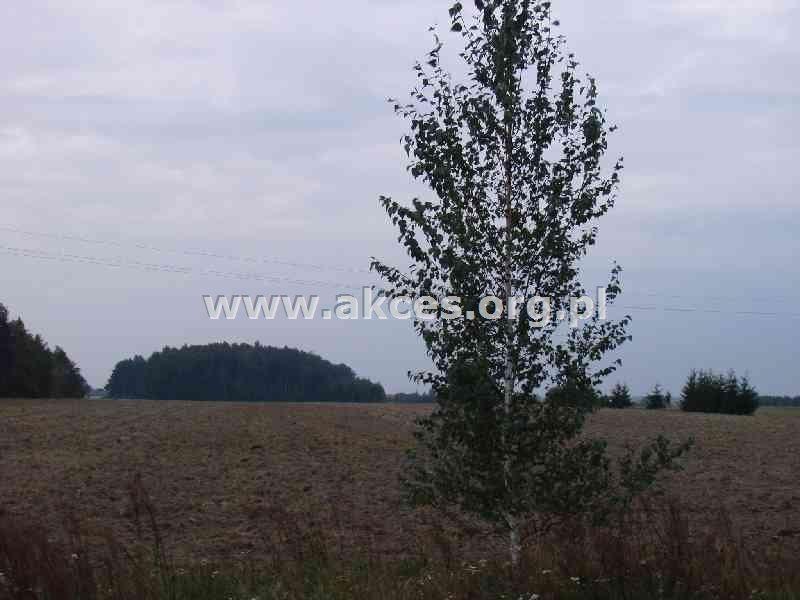 Działka budowlana na sprzedaż Wola Mrokowska  10000m2 Foto 2