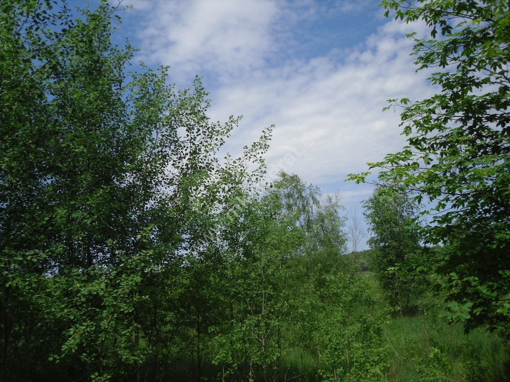 Działka siedliskowa na sprzedaż Sowia Wola  15000m2 Foto 5