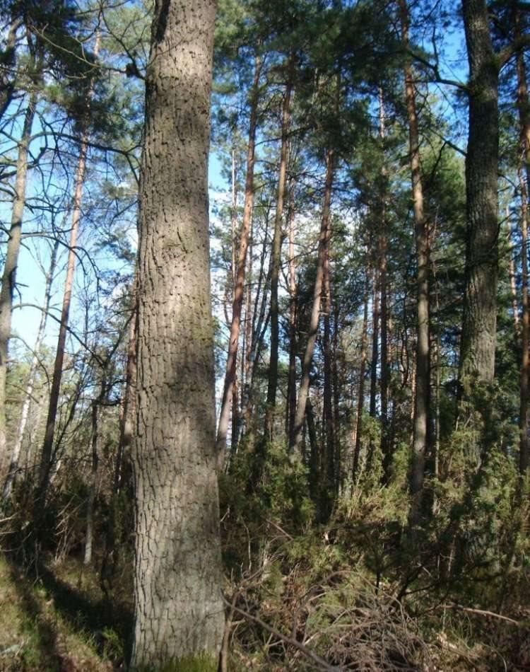 Działka leśna na sprzedaż Neple  100000m2 Foto 1