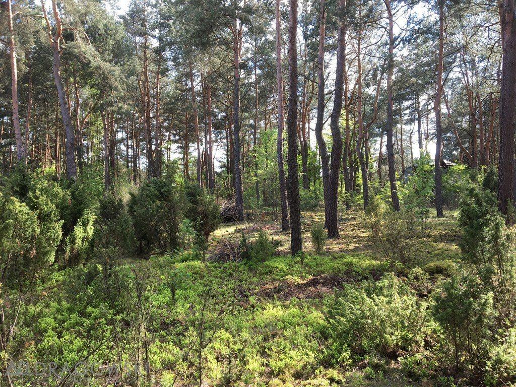 Działka leśna z prawem budowy na sprzedaż Czarnów  2098m2 Foto 1