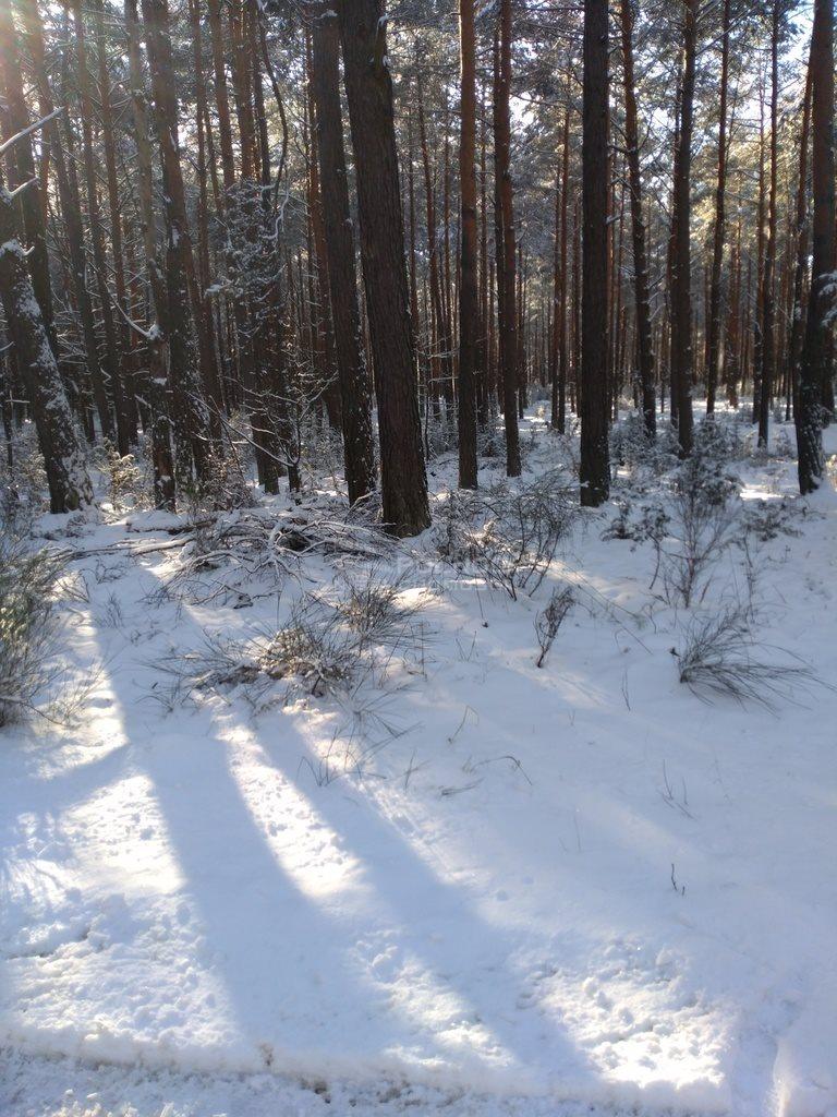 Działka leśna na sprzedaż Kuźnica  6100m2 Foto 6