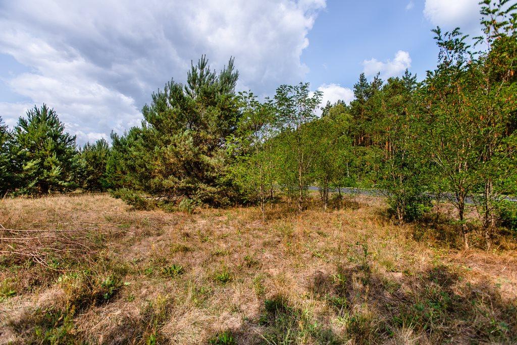 Działka inna na sprzedaż Zielona Góra, Ochla, Ochla dz. nr 2229  1010m2 Foto 5