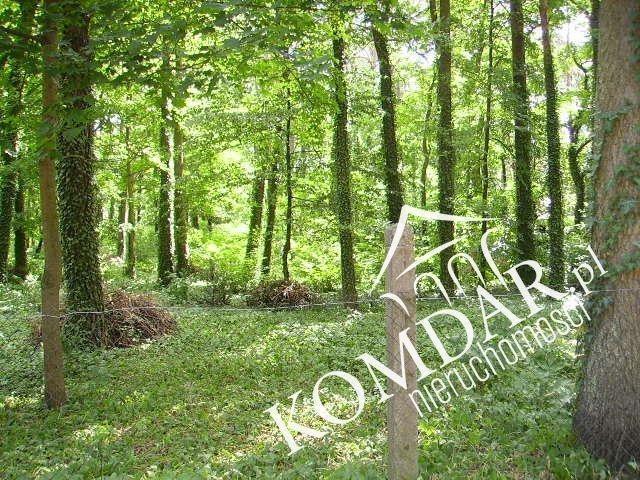 Działka leśna na sprzedaż Podkowa Leśna, Podkowa Leśna Wschodnia  3239m2 Foto 4