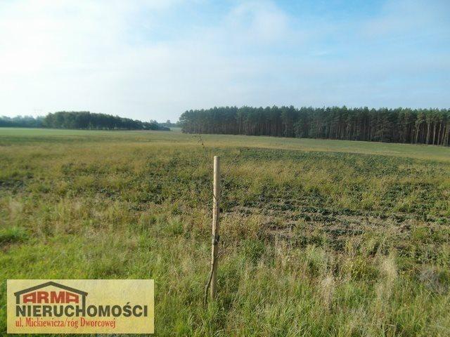 Działka rolna na sprzedaż Poczernin  3000m2 Foto 4