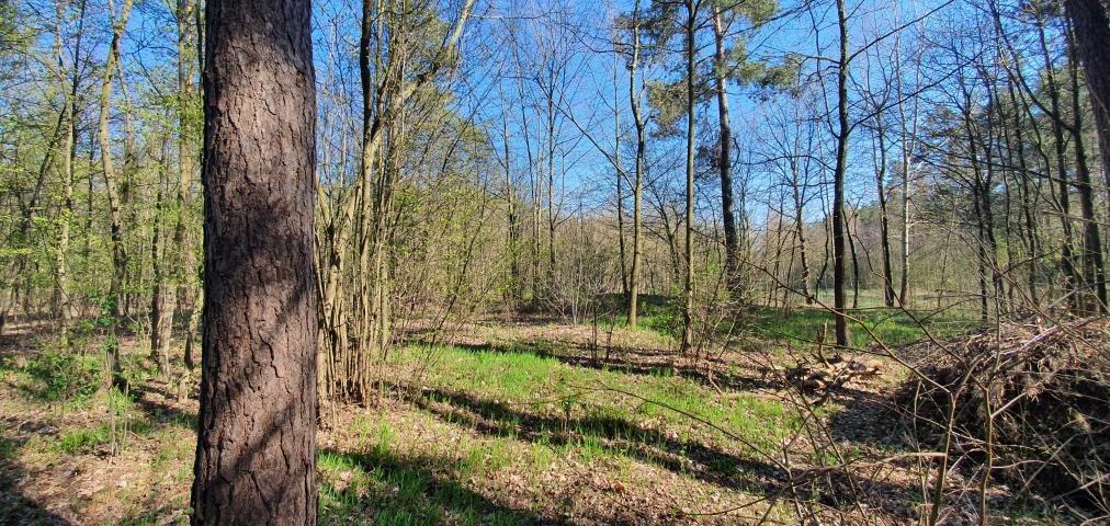 Działka leśna na sprzedaż Stary Cydzyn  8000m2 Foto 2
