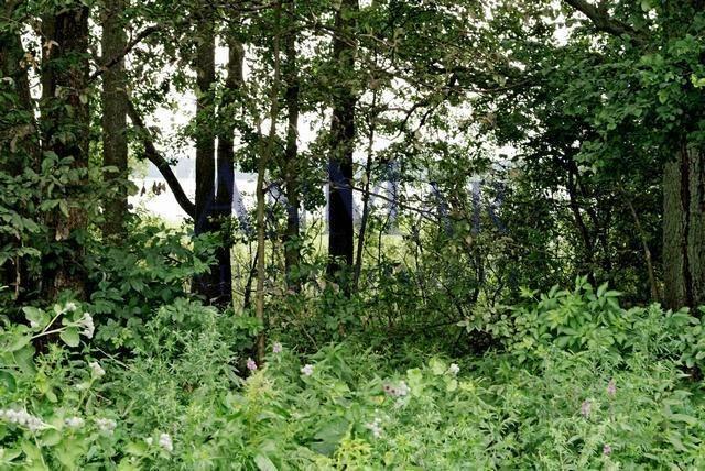 Działka rolna na sprzedaż Trygort  48700m2 Foto 4