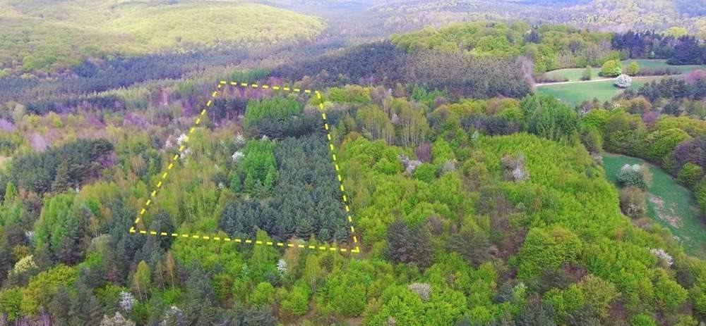 Działka rolna na sprzedaż Krzywopłoty  51135m2 Foto 5