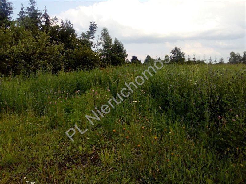 Działka rolna na sprzedaż Stanisławów  2000m2 Foto 4
