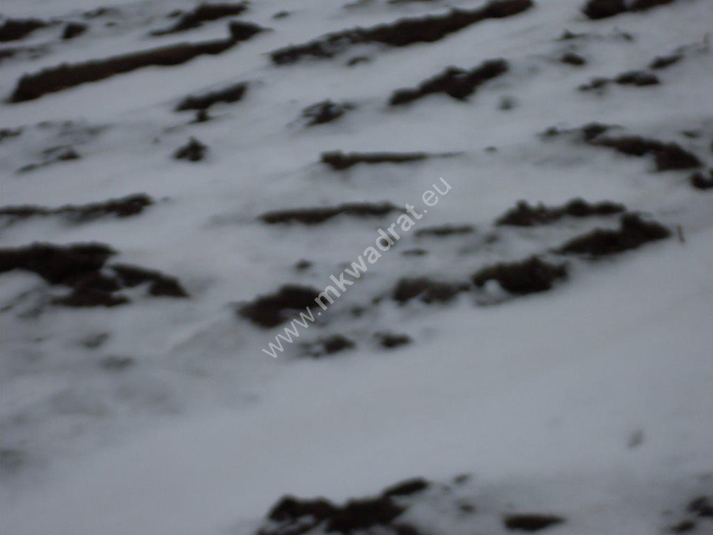 Działka siedliskowa na sprzedaż Ołtarzew  6433m2 Foto 1