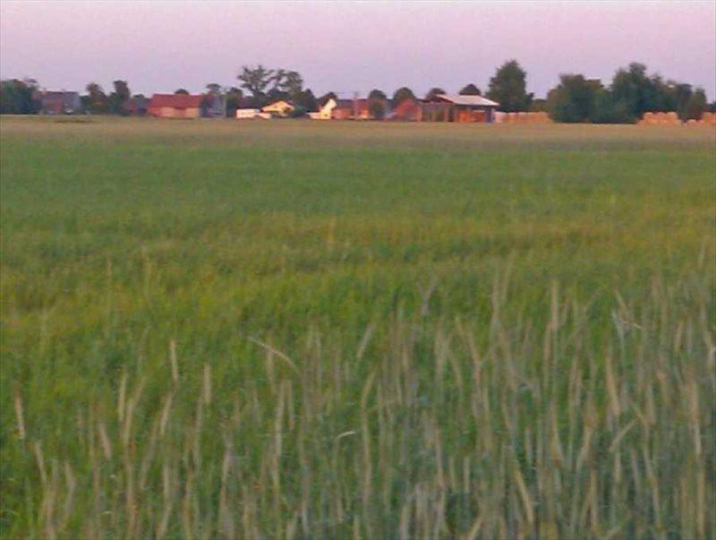 Działka rolna na sprzedaż Miłoszyce  1380m2 Foto 1