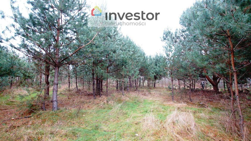 Działka leśna z prawem budowy na sprzedaż Bukowa Wielka  39157m2 Foto 9