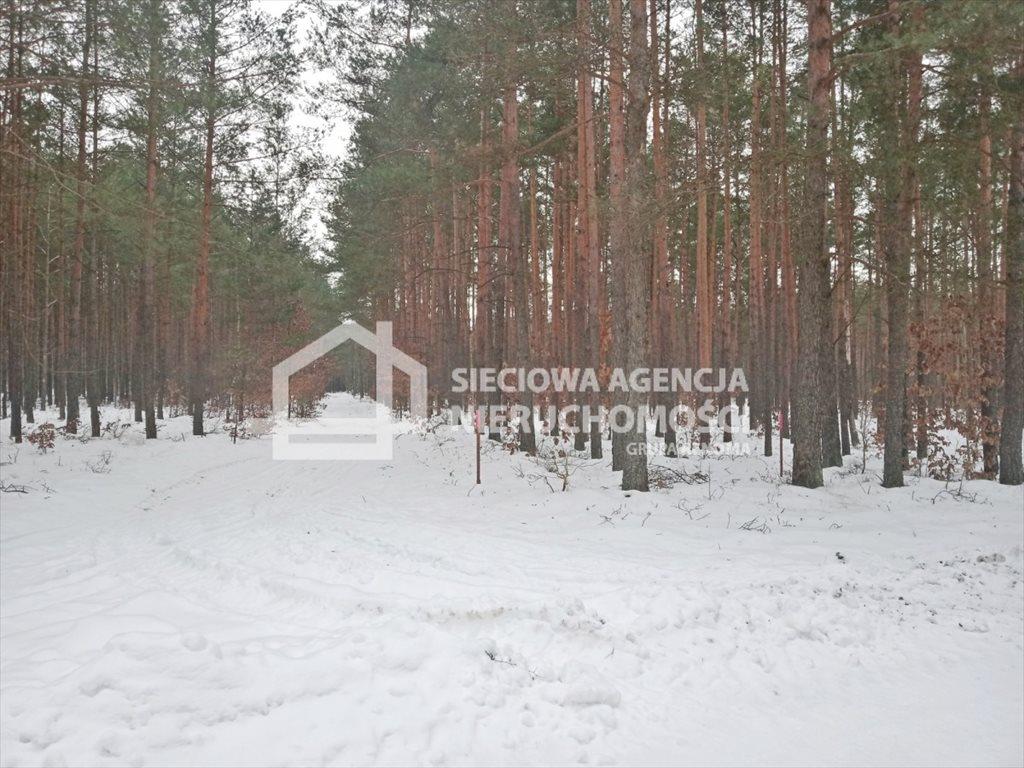 Działka leśna na sprzedaż Zawada  5155m2 Foto 4