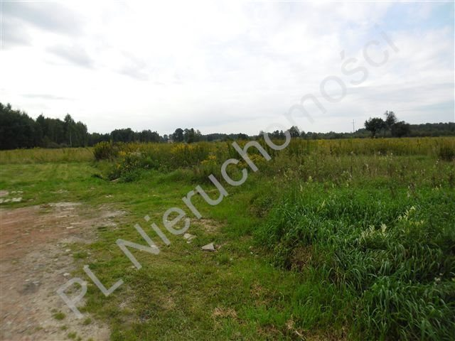 Działka rolna na sprzedaż Olesin  9983m2 Foto 5