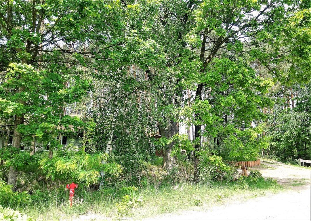 Działka leśna na sprzedaż Stary Kraszew  18100m2 Foto 6