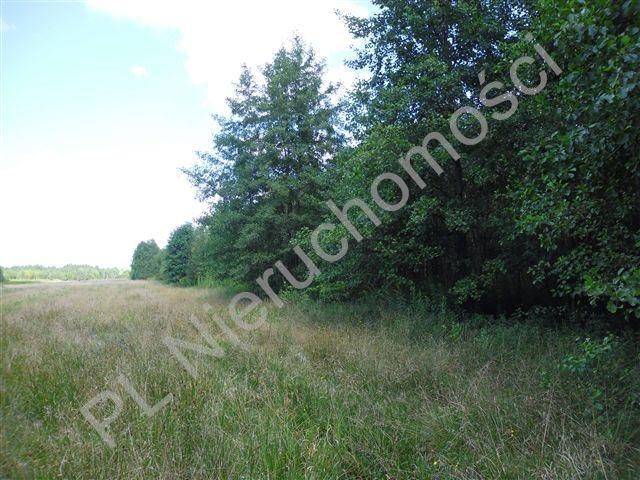 Działka rolna na sprzedaż Cisówka  30300m2 Foto 8