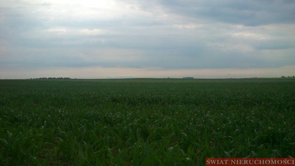 Działka rolna na sprzedaż Piotrowice  7800m2 Foto 2