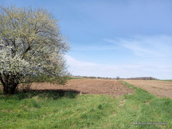 Działka rolna na sprzedaż Rogi  12000m2 Foto 1