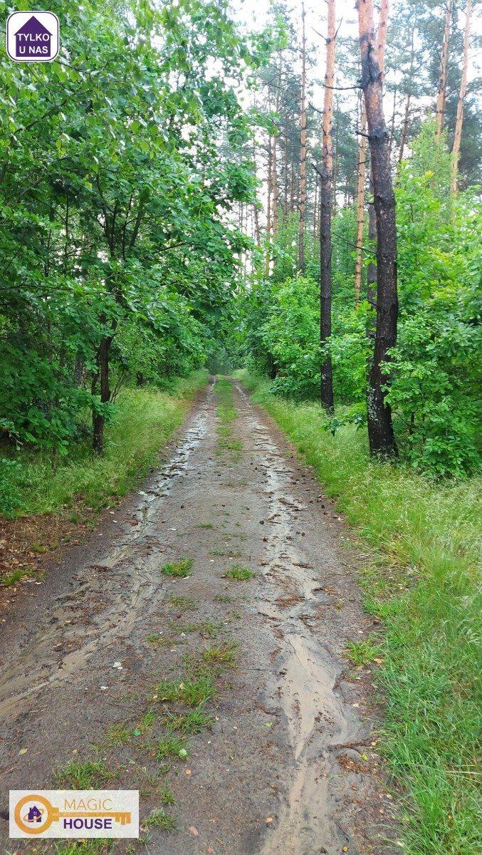 Działka leśna na sprzedaż Gołubie  18900m2 Foto 8