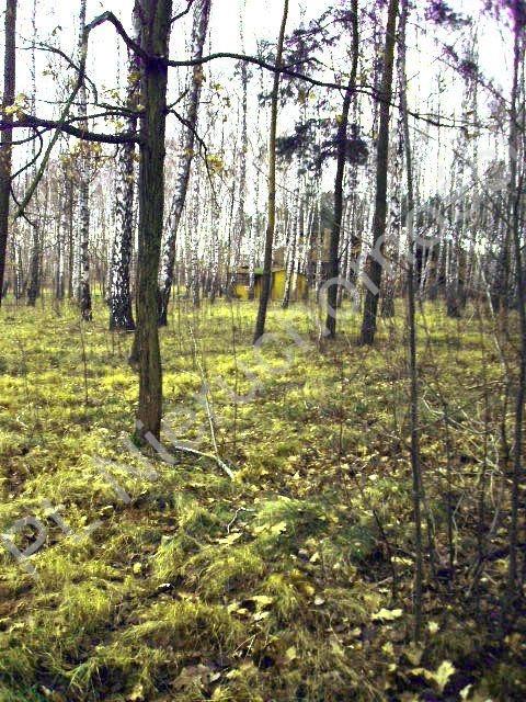 Działka leśna na sprzedaż Lesznowola  1918m2 Foto 3