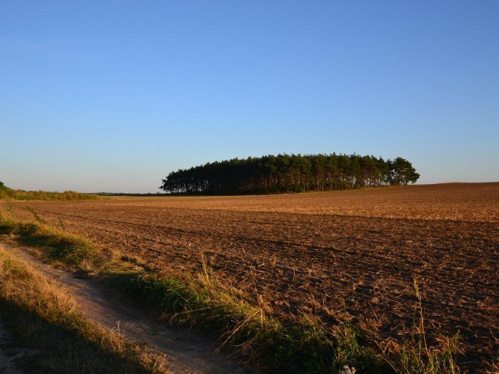 Działka leśna na sprzedaż Gogolin, Wygoda  25540m2 Foto 7