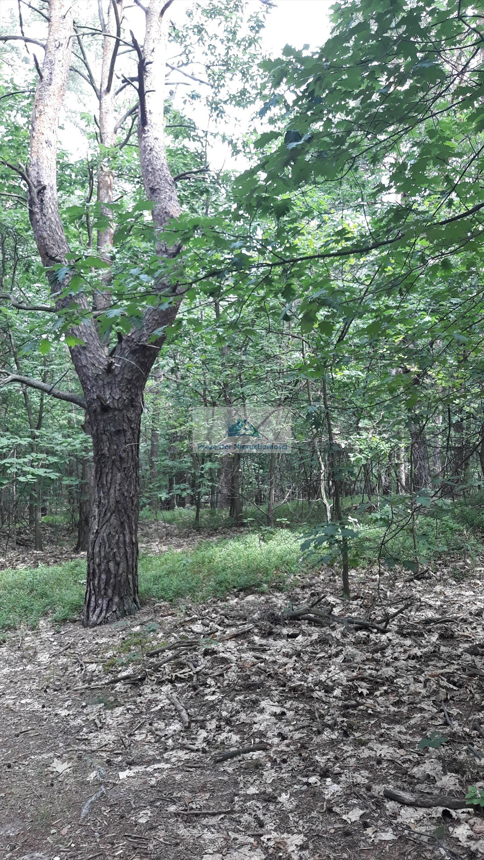 Działka leśna na sprzedaż Warszawa, Wawer, Międzylesie, Torfowa  3456m2 Foto 3