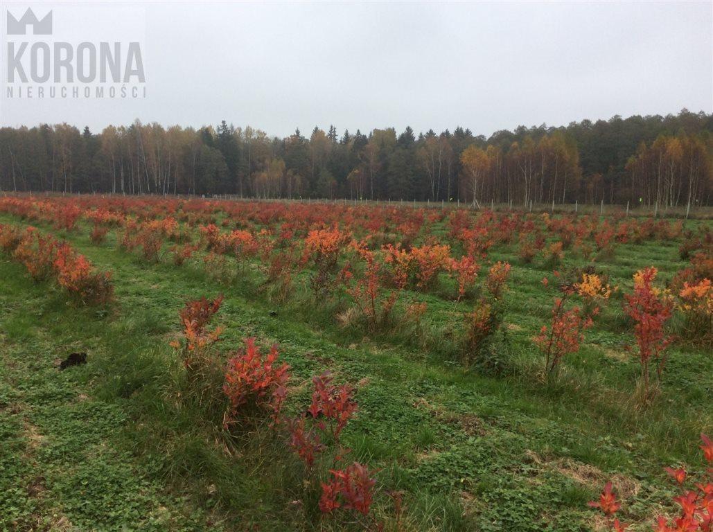 Działka rolna na sprzedaż Pasieki, Babia Góra  13300m2 Foto 10