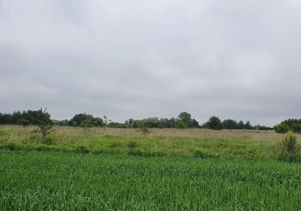 Działka rolna na sprzedaż Malinowice  13090m2 Foto 1