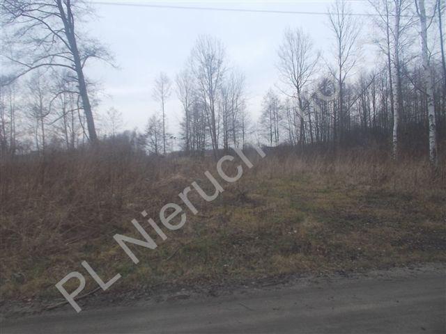 Działka siedliskowa na sprzedaż Szczęsne  11100m2 Foto 1