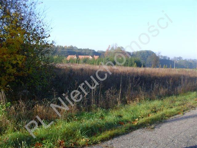 Działka rolna na sprzedaż Gurba  11800m2 Foto 1